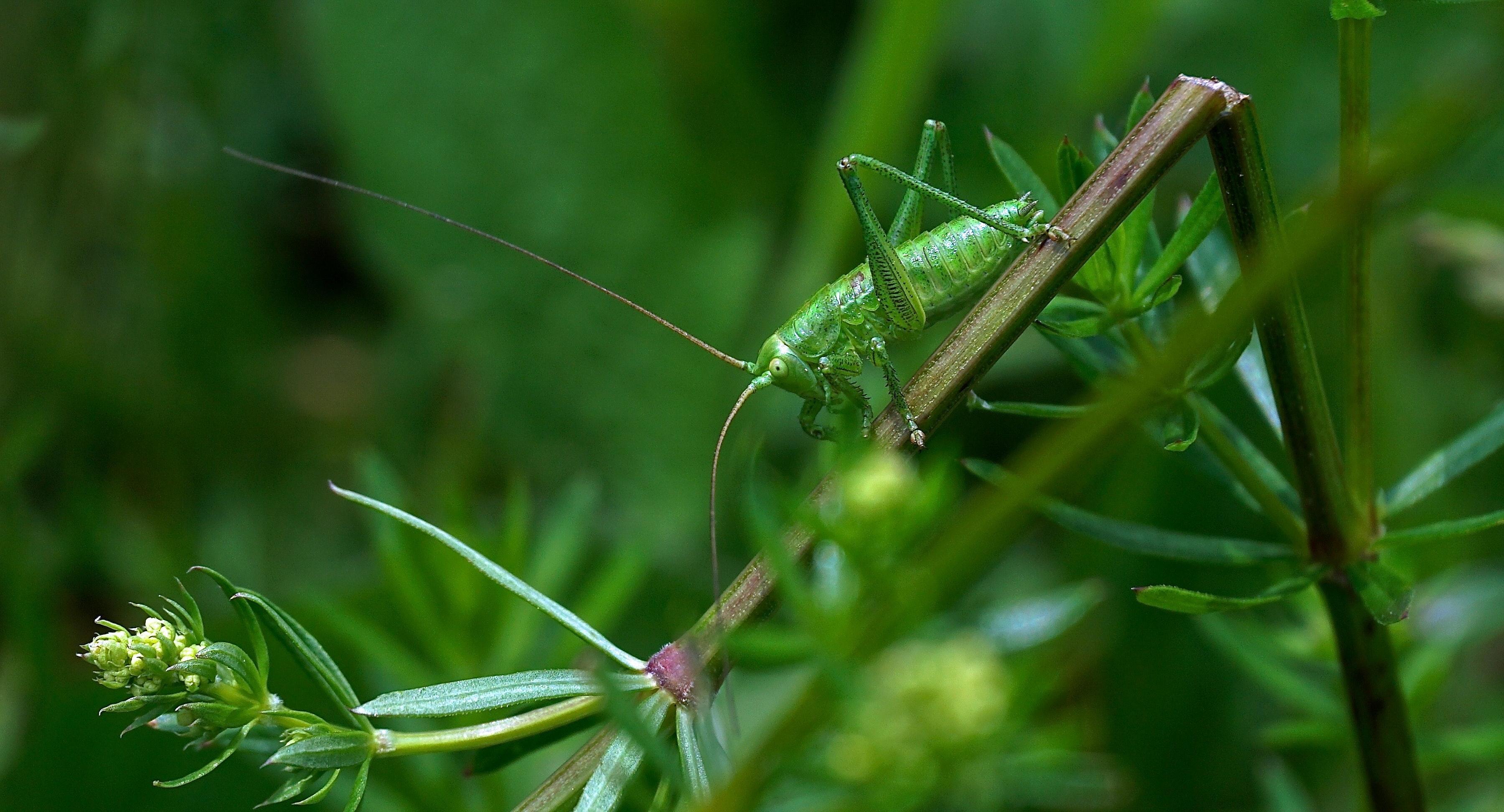 vida sostenibilidad sostenible ecosistema naturaleza planeta